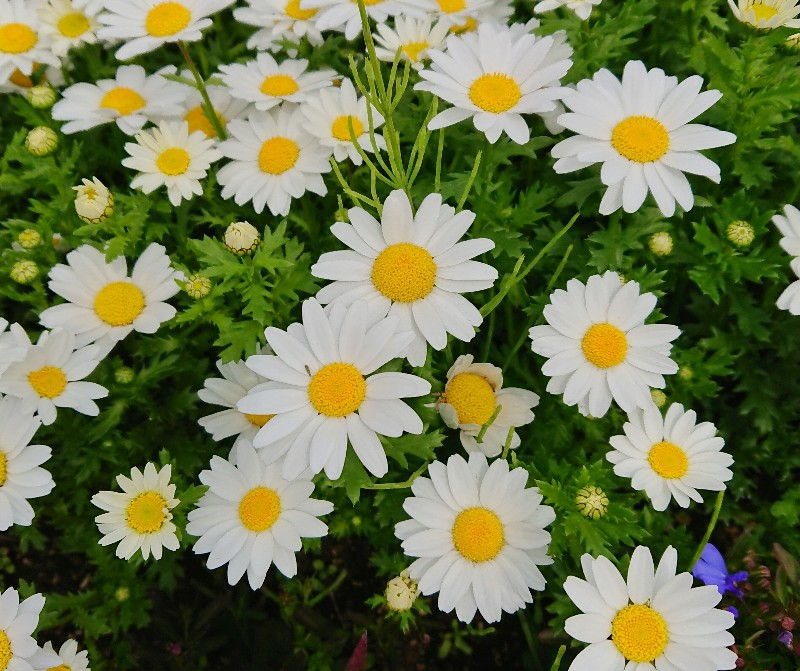 f:id:flowerTDR:20200420075940j:image
