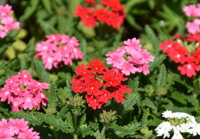 f:id:flowerTDR:20200424095712j:image