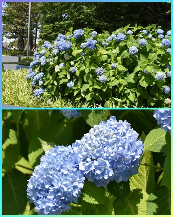 f:id:flowerTDR:20200427090304j:image