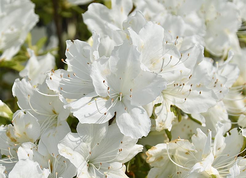 f:id:flowerTDR:20200506085412j:plain