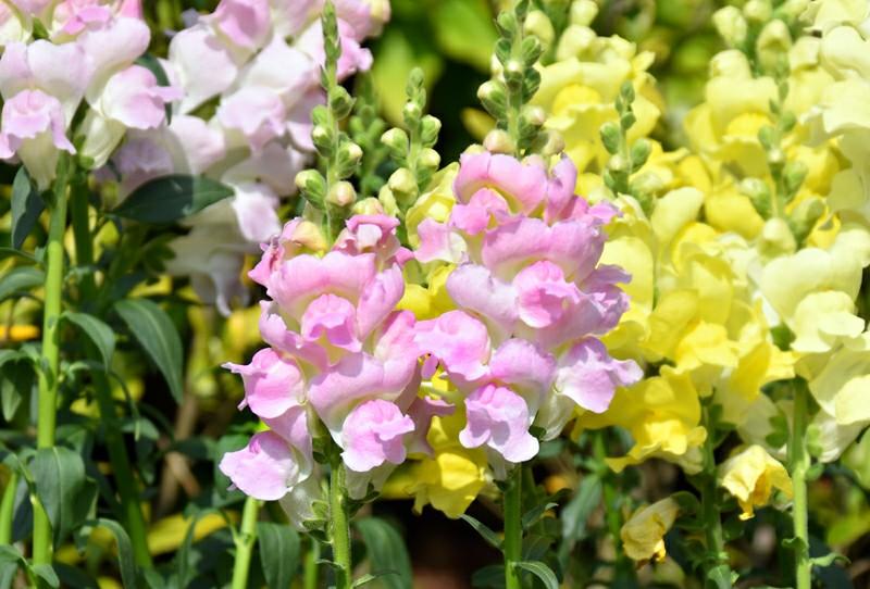 f:id:flowerTDR:20200507090131j:image