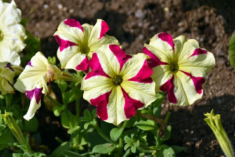 f:id:flowerTDR:20200507090139j:image