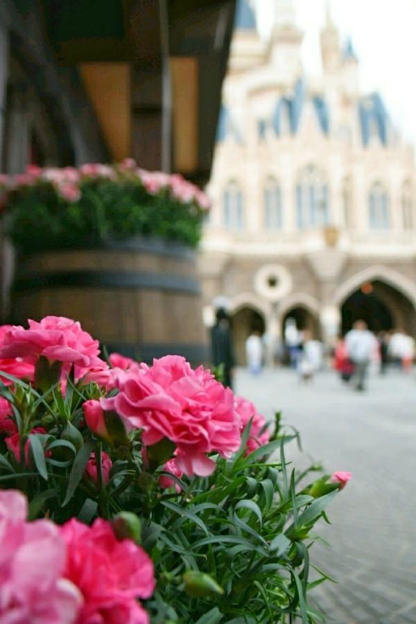 f:id:flowerTDR:20200510092118j:image