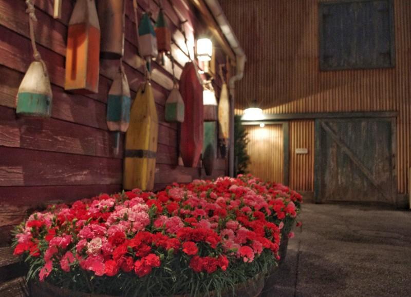f:id:flowerTDR:20200510092127j:image