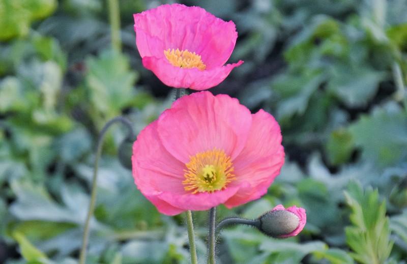 f:id:flowerTDR:20200512091756j:image