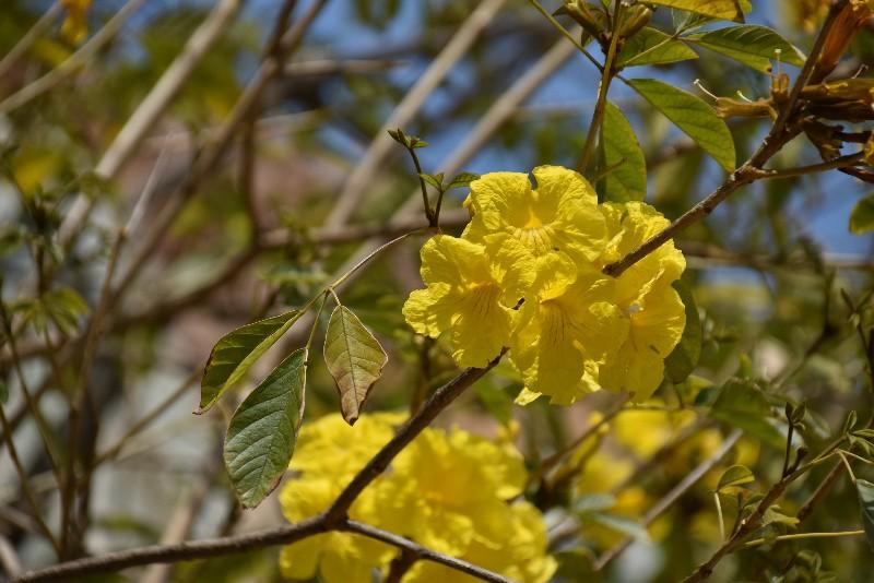 f:id:flowerTDR:20200514114738j:image