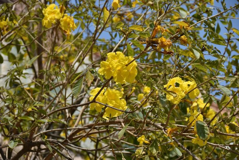 f:id:flowerTDR:20200514114745j:image