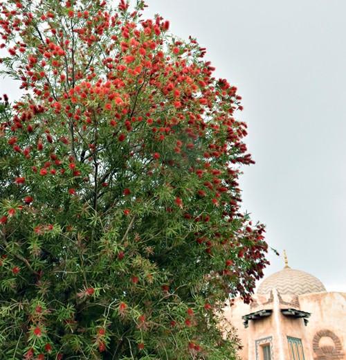 f:id:flowerTDR:20200518090135j:image