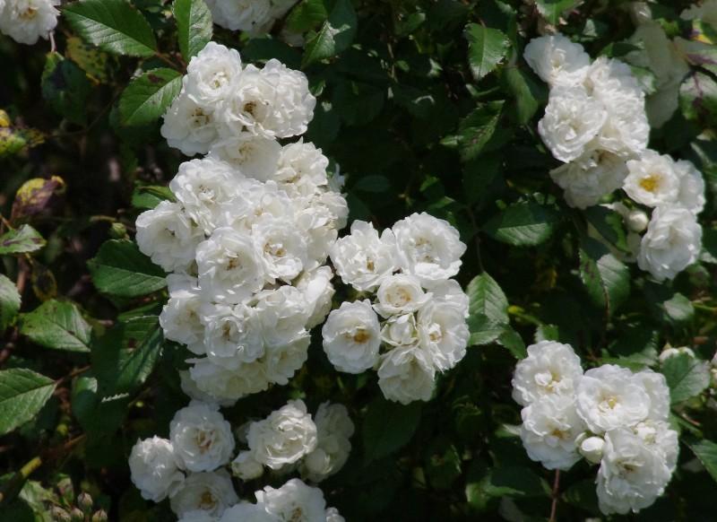 f:id:flowerTDR:20200520090309j:image
