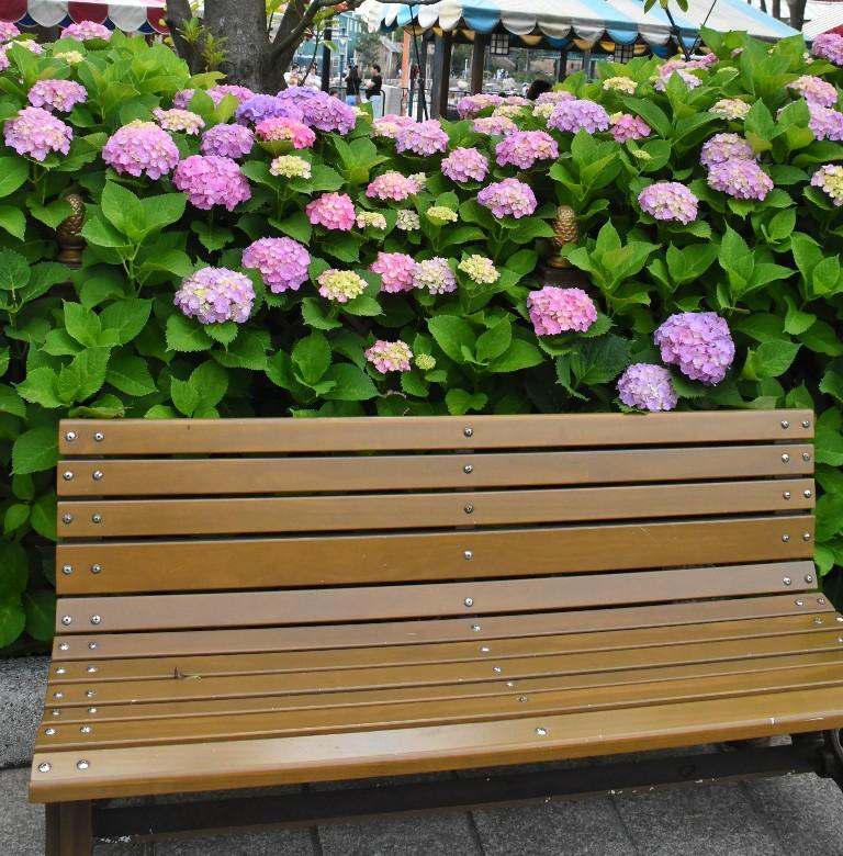 f:id:flowerTDR:20200601091520j:image