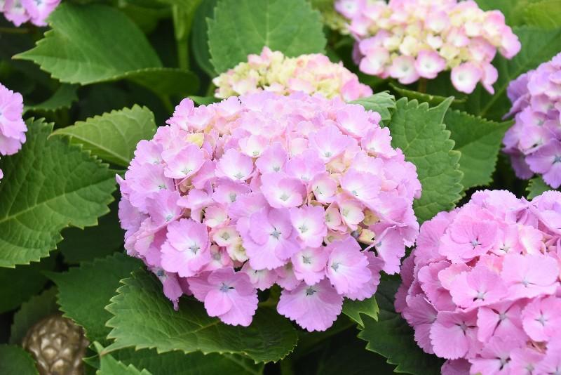 f:id:flowerTDR:20200601091602j:image