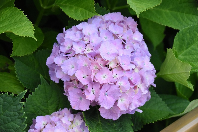 f:id:flowerTDR:20200601091610j:image