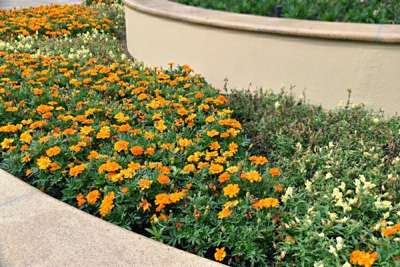 f:id:flowerTDR:20200606080031j:image