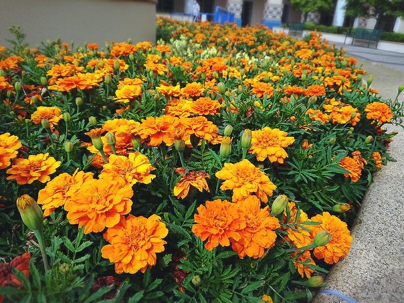 f:id:flowerTDR:20200606080037j:image