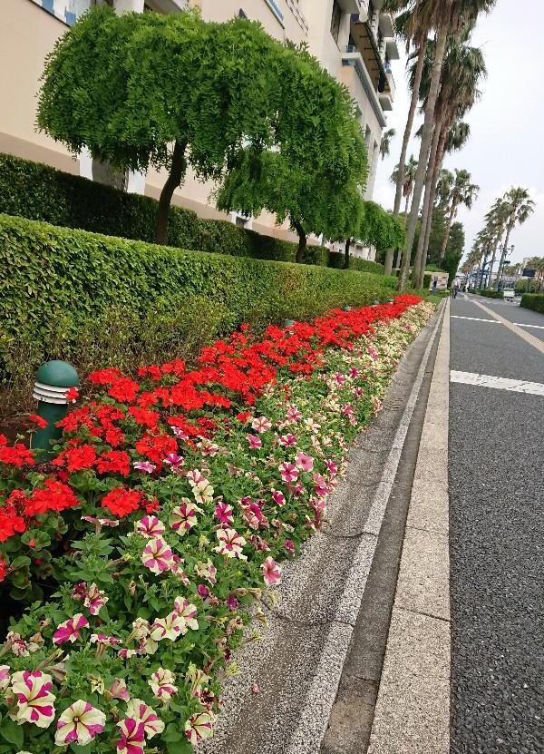 f:id:flowerTDR:20200607090247j:image