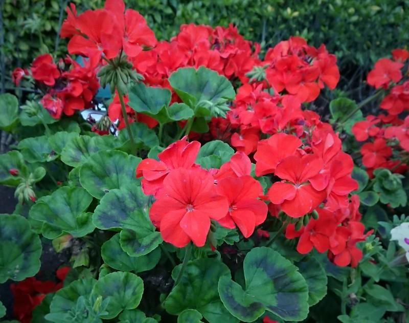 f:id:flowerTDR:20200607090258j:image