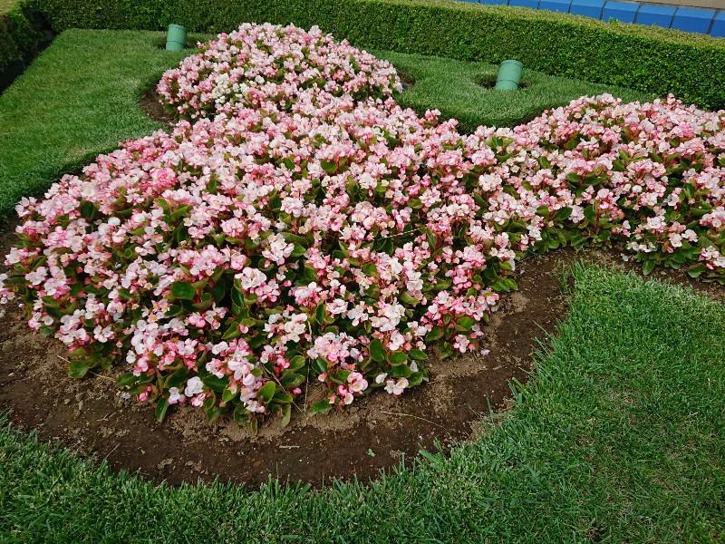 f:id:flowerTDR:20200608072526j:image