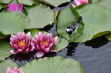 f:id:flowerTDR:20200619093629j:plain