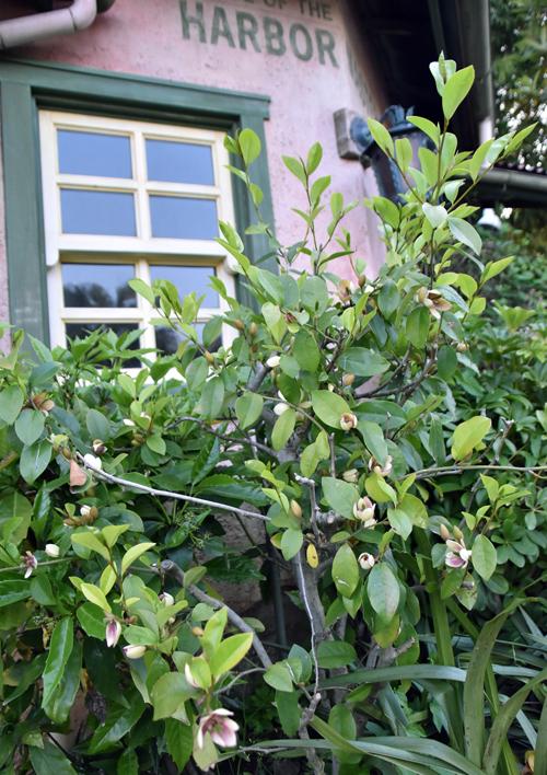 f:id:flowerTDR:20200620114151j:plain