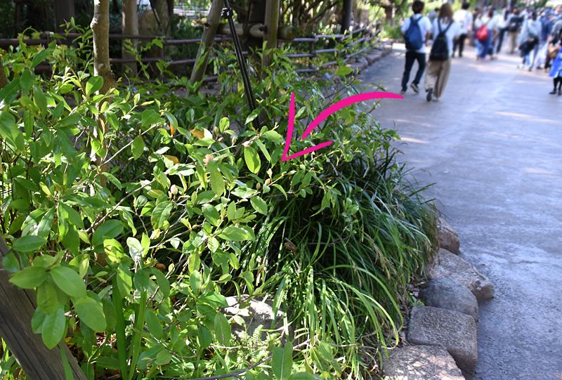 f:id:flowerTDR:20200620114209j:plain