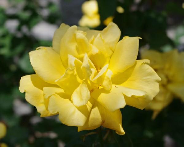 f:id:flowerTDR:20200621085114j:image