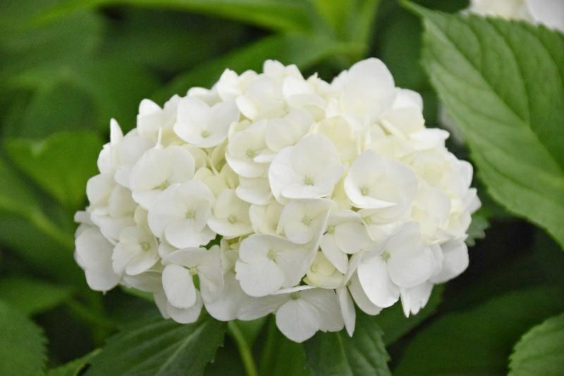 f:id:flowerTDR:20200622092718j:image