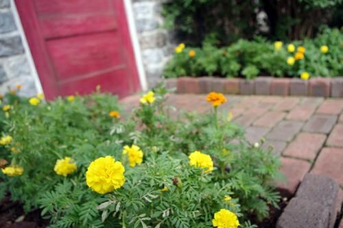 f:id:flowerTDR:20200626134105j:image
