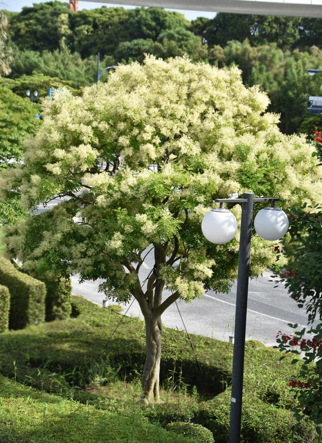 f:id:flowerTDR:20200627103114j:plain