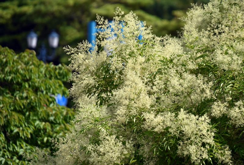 f:id:flowerTDR:20200627103124j:plain