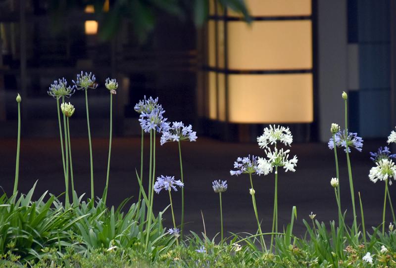 f:id:flowerTDR:20200629085636j:plain