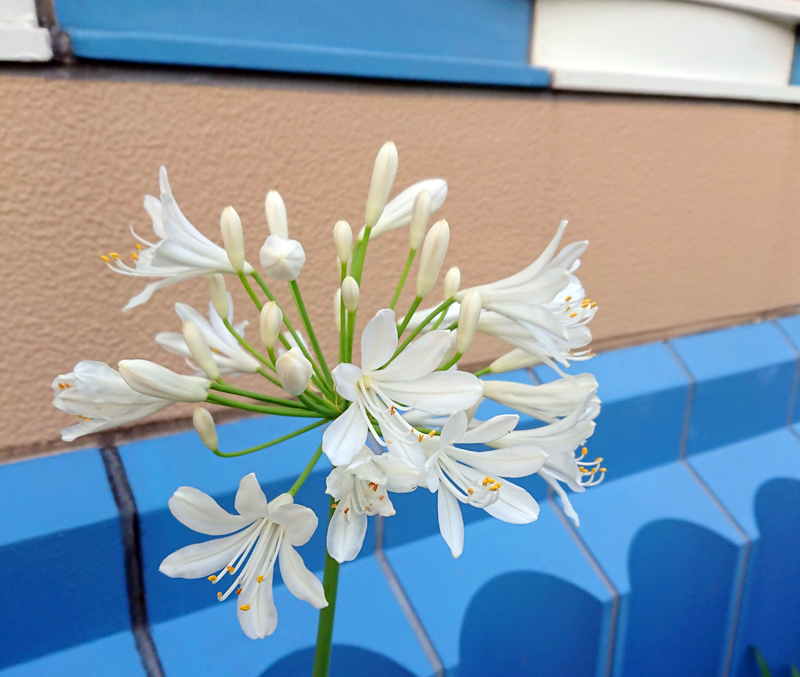f:id:flowerTDR:20200629085659j:plain