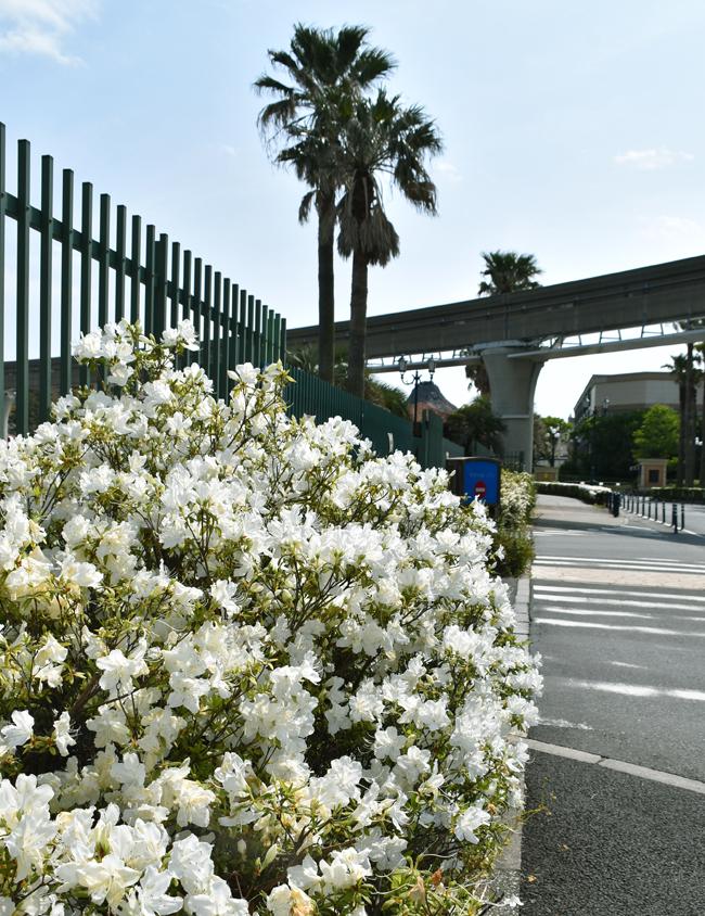 f:id:flowerTDR:20200701001808j:plain