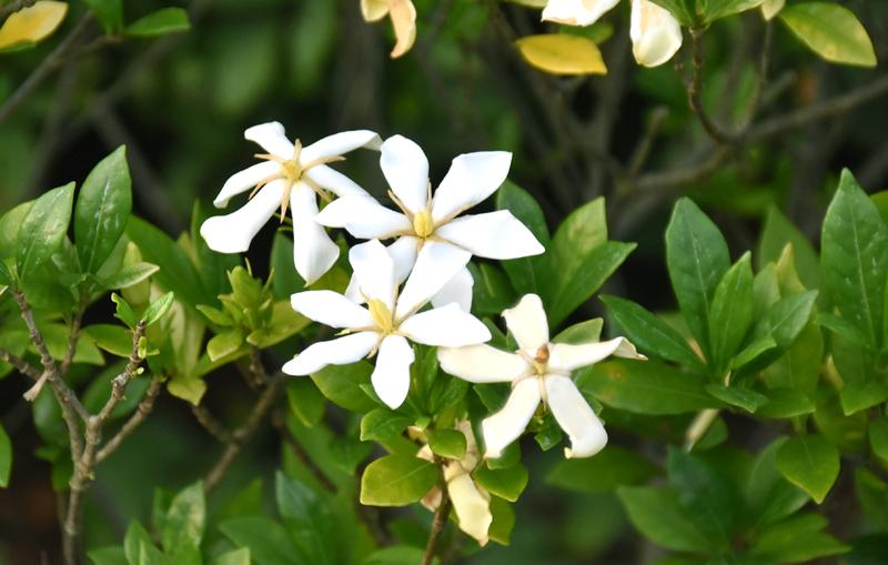 f:id:flowerTDR:20200702081526j:plain