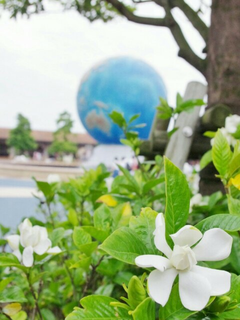 f:id:flowerTDR:20200702091628j:image