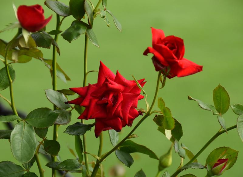 f:id:flowerTDR:20200710095019j:plain
