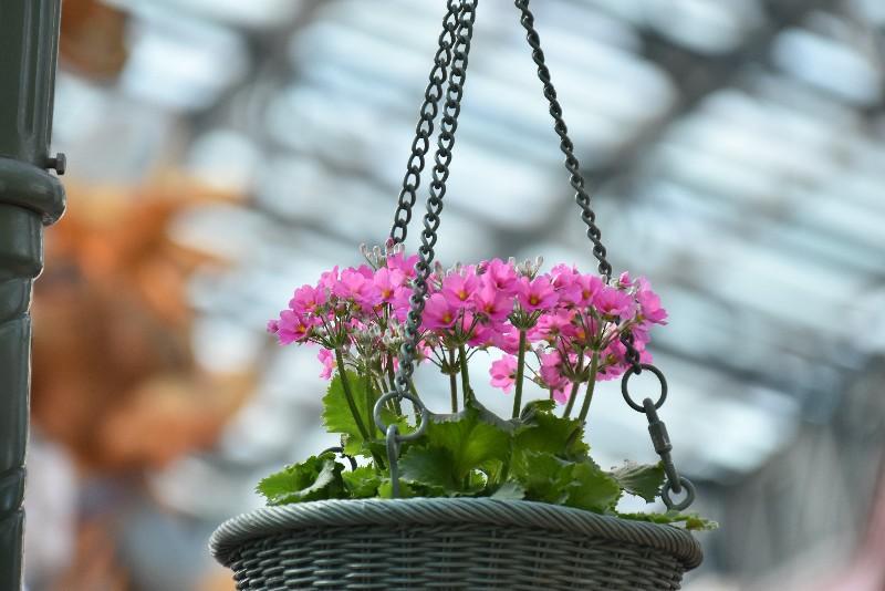 f:id:flowerTDR:20200710185212j:image