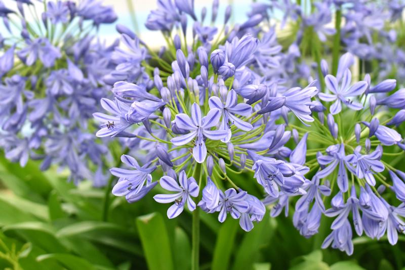 f:id:flowerTDR:20200710231532j:plain