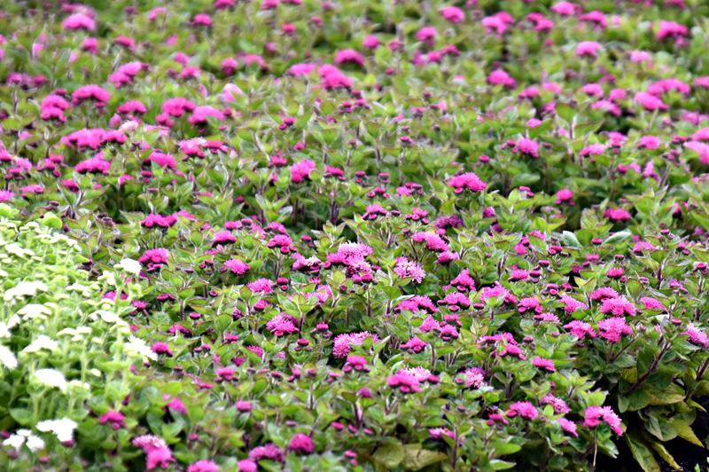 f:id:flowerTDR:20200711001707j:plain