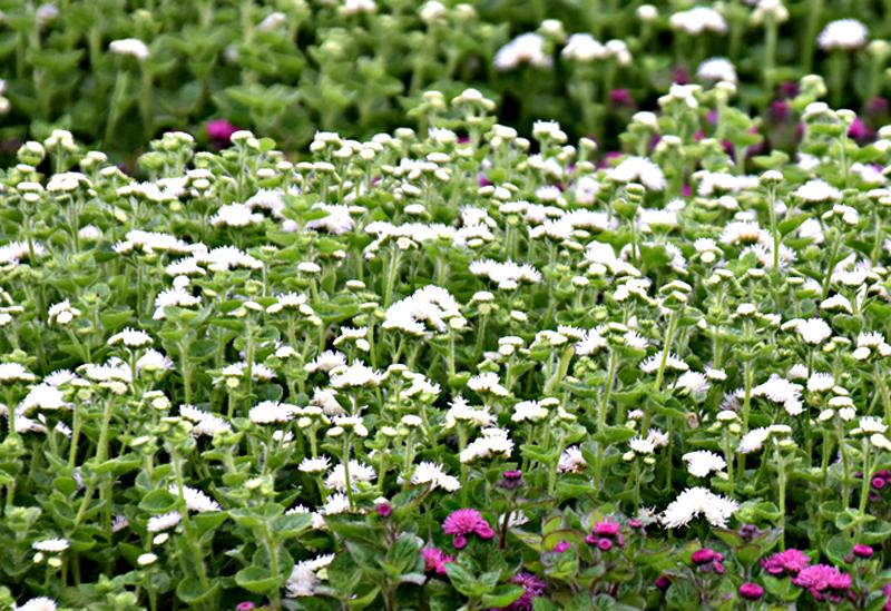 f:id:flowerTDR:20200711001739j:plain