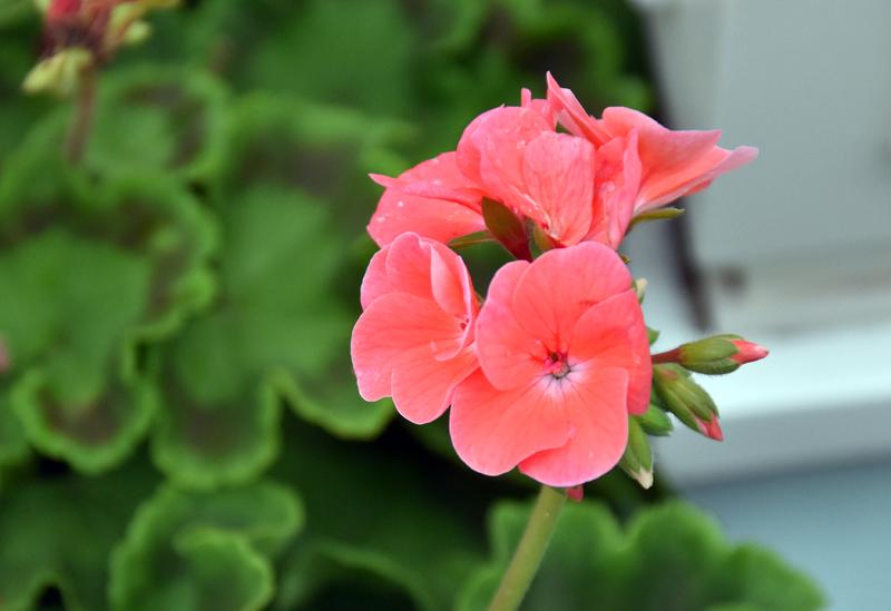 f:id:flowerTDR:20200711230227j:plain