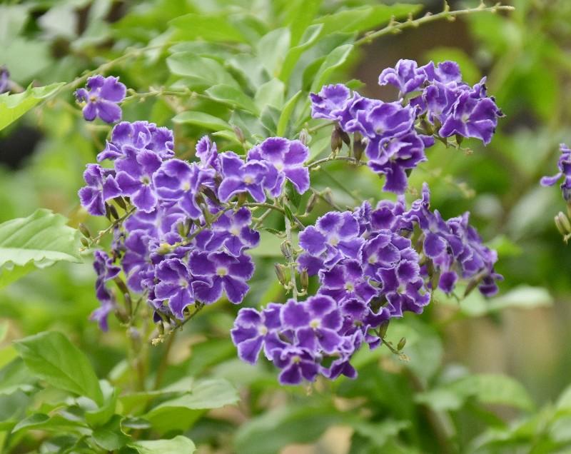 f:id:flowerTDR:20200714090313j:image