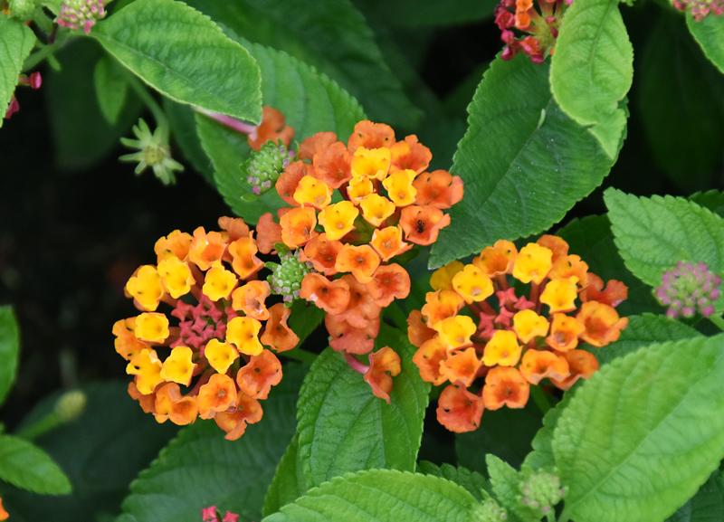 f:id:flowerTDR:20200716001015j:plain