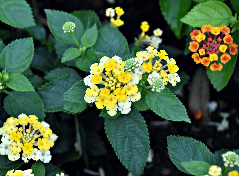 f:id:flowerTDR:20200716001024j:plain