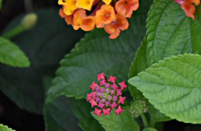 f:id:flowerTDR:20200716001034j:plain