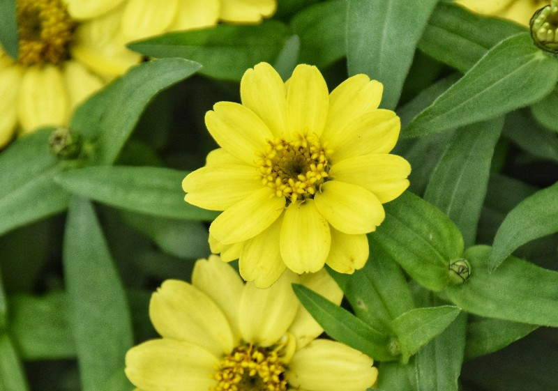 f:id:flowerTDR:20200718092518j:image