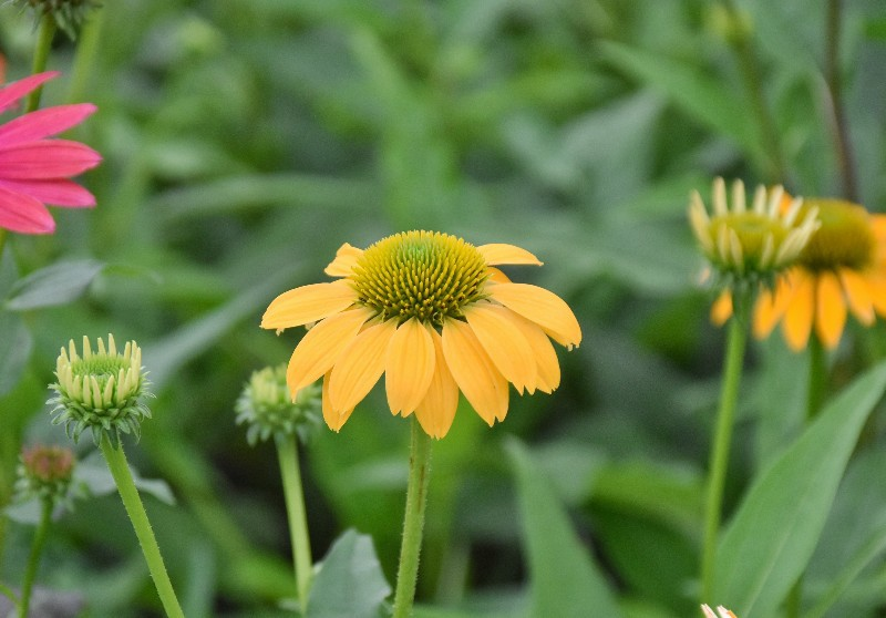 f:id:flowerTDR:20200720092221j:image
