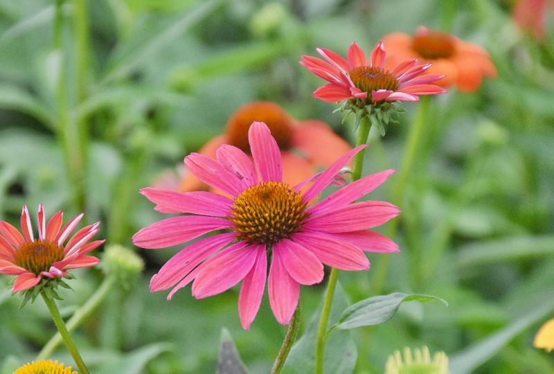 f:id:flowerTDR:20200720092230j:image