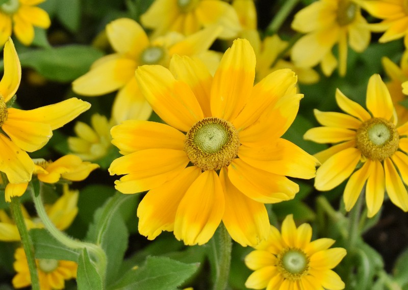 f:id:flowerTDR:20200721090540j:image