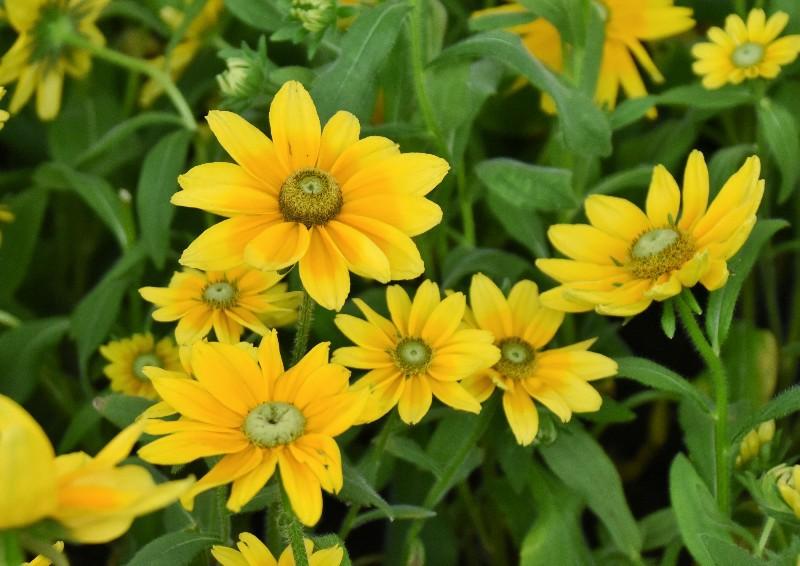 f:id:flowerTDR:20200721090549j:image