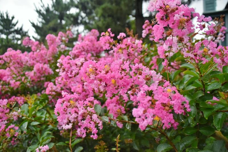 f:id:flowerTDR:20200726001759j:image